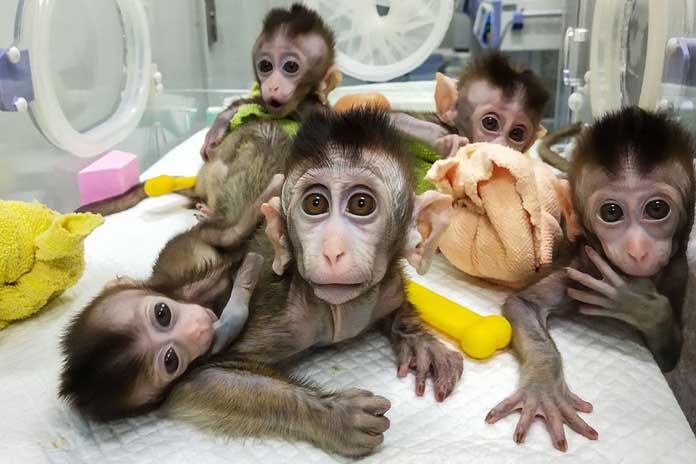 corona virus vaccine on monkeys