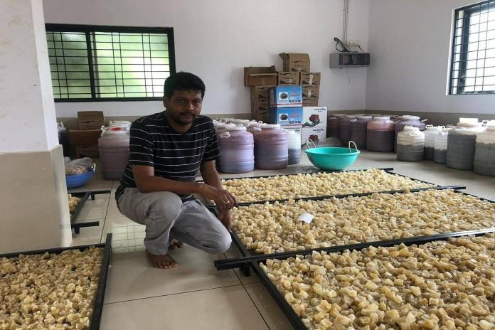 vishwnath petha farmer